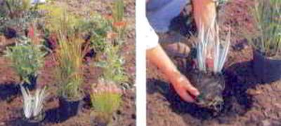 посадить растения
