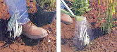 Как правильно посадить растения