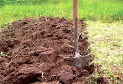 о почве дачного участка